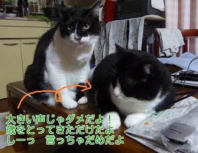 P1350786編集②-1.jpg