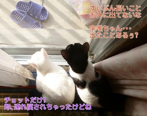 P1400570編集②.jpg