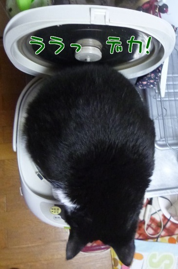 P1410285編集②.jpg
