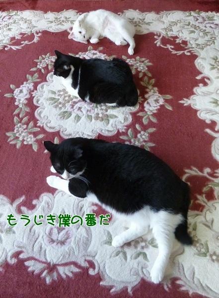 P1410400編集②-1.jpg