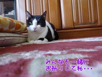 P1420265編集②.jpg
