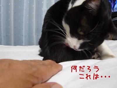 P1480515編集②.jpg