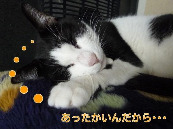 P1530815編集②.jpg