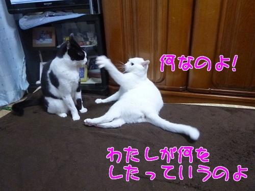 P1540064編集②.jpg