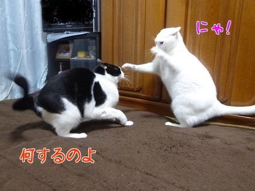P1540073編集②.jpg