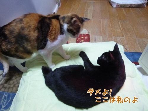 P1540894編集②.jpg