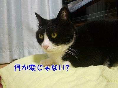P1550116編集②.jpg