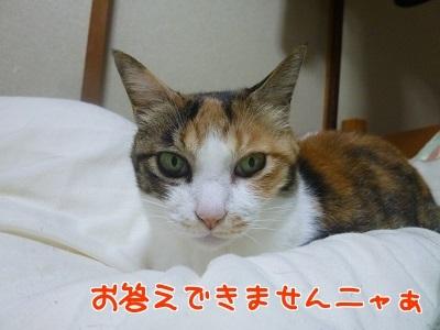 P1550151編集②.jpg