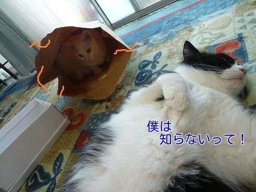P1560089編集②.jpg