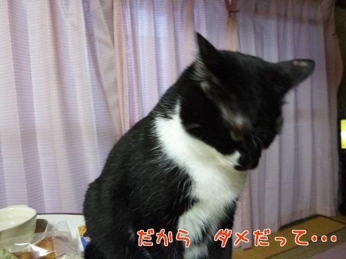 P1580495編集②.jpg