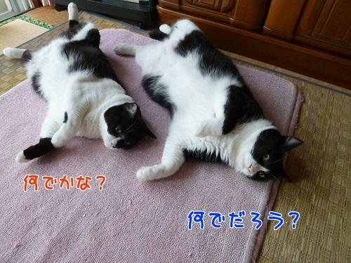 P1580508編集②.jpg