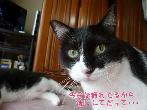 P1580893編集②.jpg