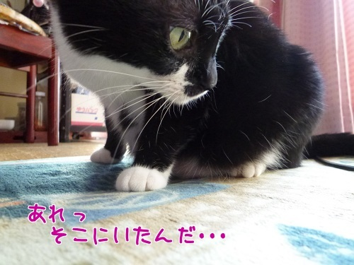 P1600599編集②.jpg