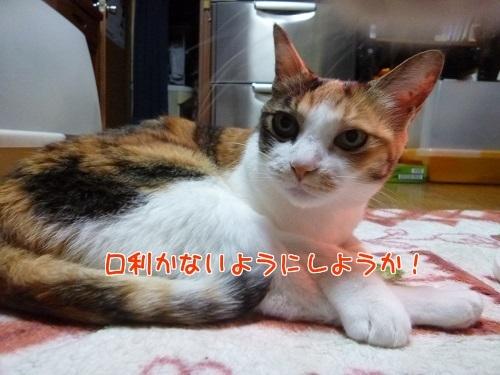 P1620636編集②.jpg