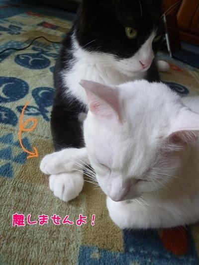 P1670592編集②.jpg