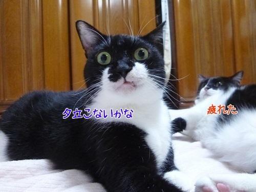 P1690259編集②.jpg