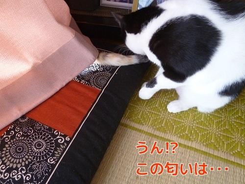 P1700344編集②.jpg