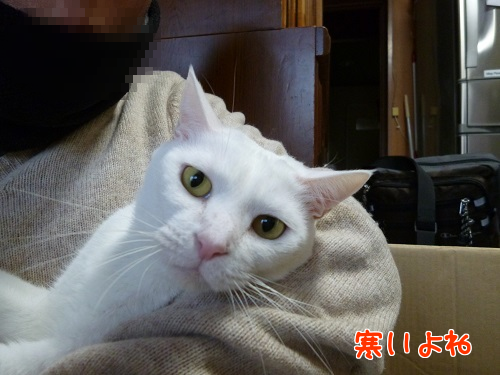 P1720684編集②.png