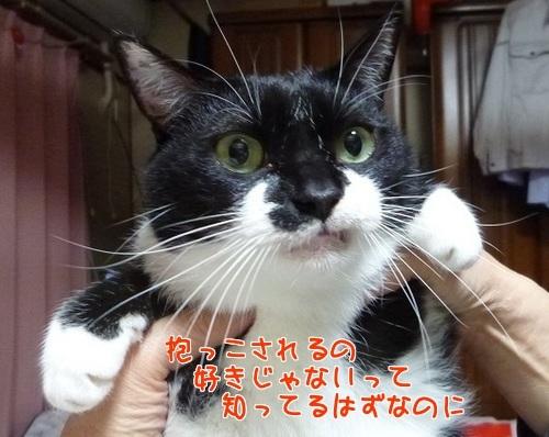 P1750184編集②.jpg