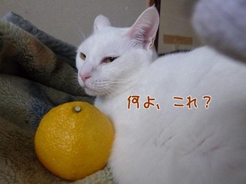 P1750251編集②.jpg