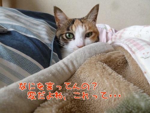 P1750519編集②.jpg
