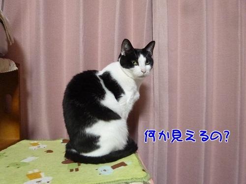 P1760102編集②.jpg