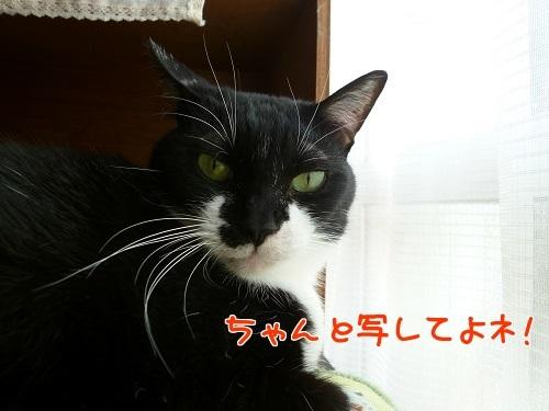 P1760969編集②.jpg