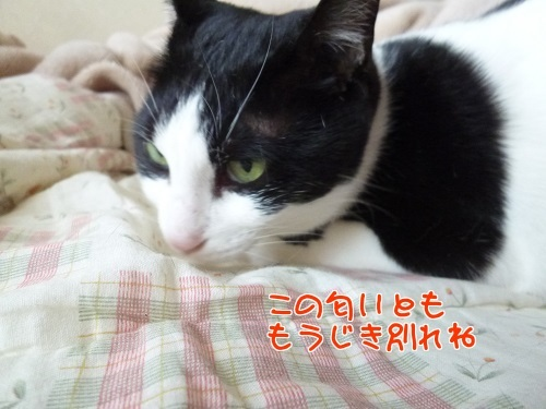 P1770326編集②.jpg