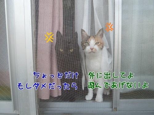 P1770432編集②-1.jpg