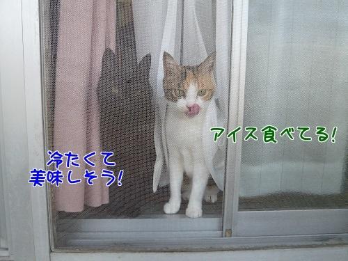 P1770435編集②.jpg