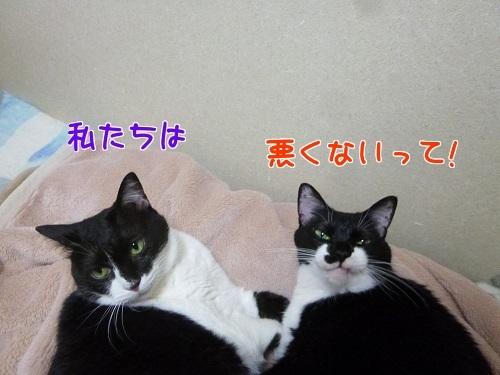 P1780154編集②.jpg