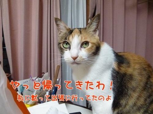 P1780919編集②.jpg