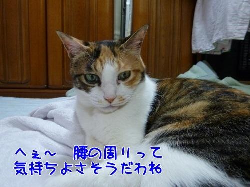 P1790068編集②.jpg