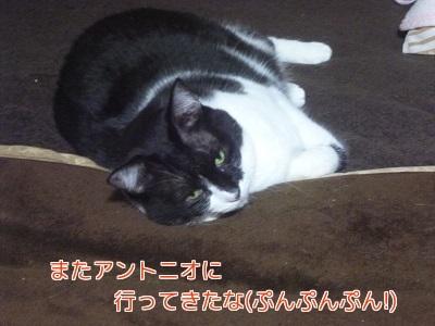 P1850169編集②.jpg