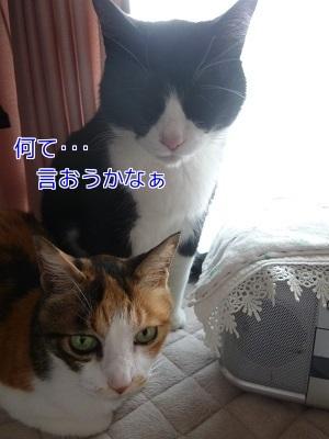 P1880875編集②.jpg