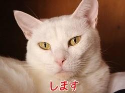 P2016.10.29 宇唯②.jpg