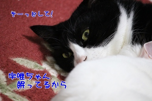 IMG_0864編集②.jpg