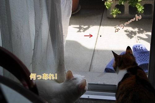 IMG_0963編②.jpg