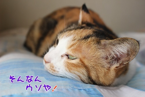 IMG_1125編集②-1.jpg