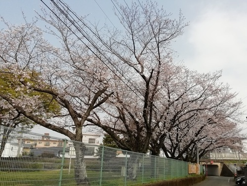 IMG_20190330三丁目.jpg
