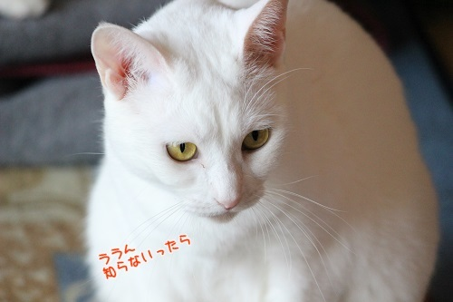IMG_2164編集②.jpg