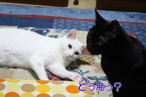 IMG_3177編集②.jpg