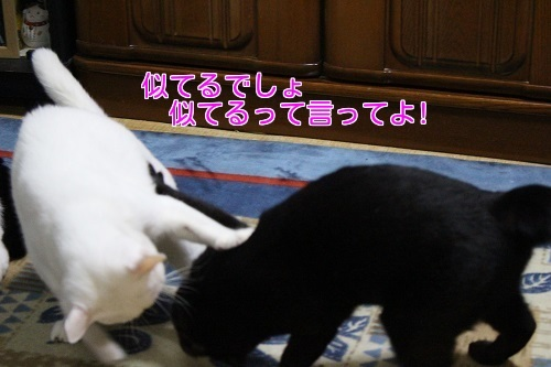 IMG_3178編集②.jpg