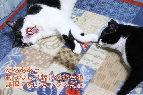 IMG_3306編集②.jpg