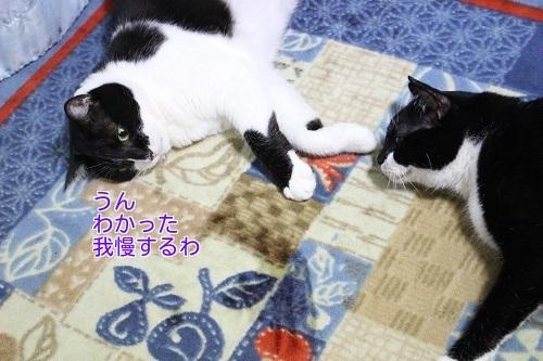 IMG_3309編集②.jpg