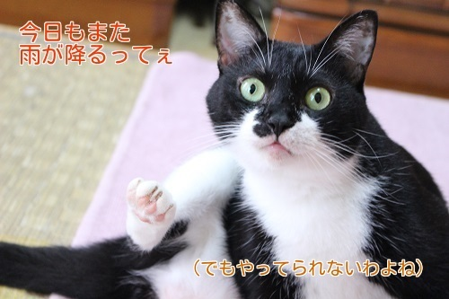 IMG_4428編集②.jpg
