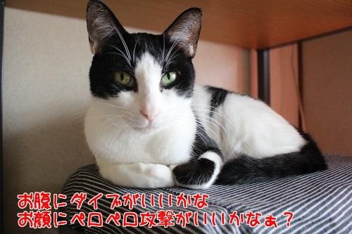 IMG_4630編集②.jpg