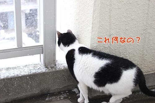 IMG_4905編集②.jpg