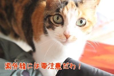 IMG_5232編集②.jpg