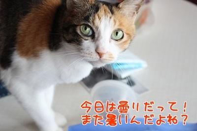 IMG_5236編集②.jpg